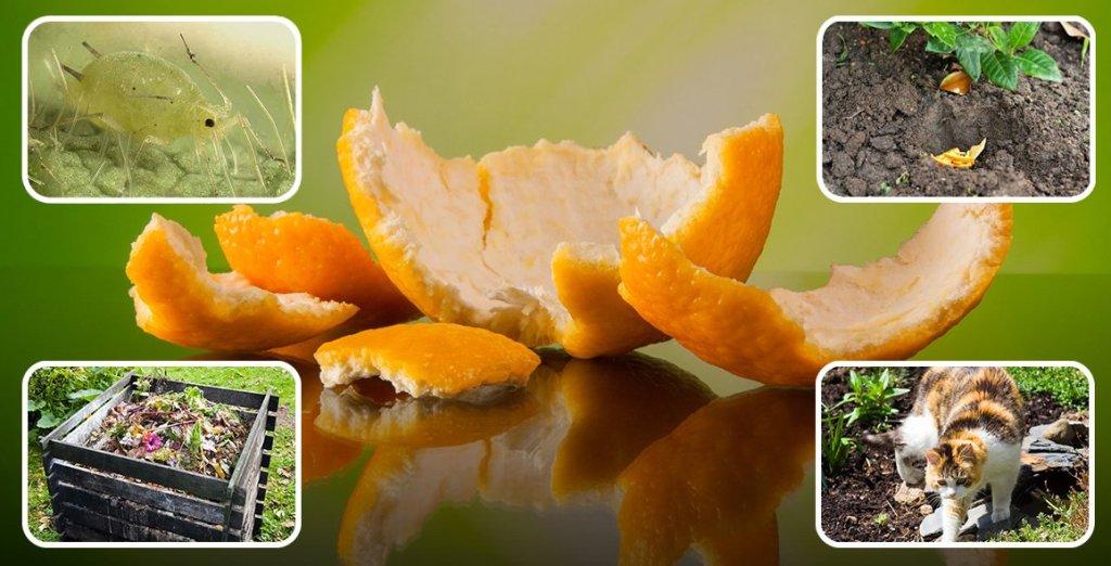kak-s-pomoshhyu-apelsinovyh-korok-izbavitsya-ot-muravev-tli-otpugnut-koshek-s-gryadok-ogoroda-foto-apelsinovye-korki-v-ogorode...