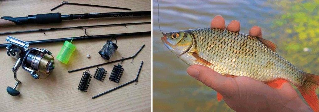 zametki-rybaka-osobennosti-lovli-plotvy-foto-lovlya-plotvy-na-fider-vesnoj