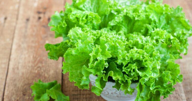 kak-vyrashhivat-listovoj-salat-pravila-vyrashhivaniya-i-uhoda-foto-listovoj-salat-latuk