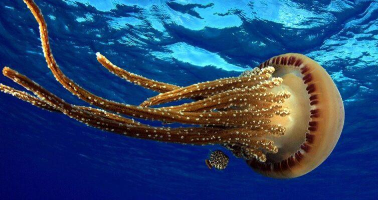 uchenye-sdelali-otkrytie-blagodarya-kotoromu-mozhno-sushhestvenno-snizit-poteri-tepla-v-domah-ili-sshit-umnuyu-odezhdu-foto-meduza...