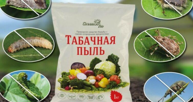 Tabachnaya-pyl-kak-eyo-ispolzovat-v-sadu-i-ogorode-foto-primenenie-tabachnoj-pyli-v-sadu-ogorode...