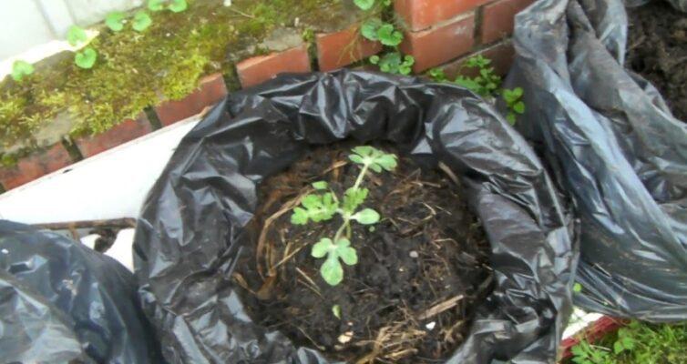 prigotovlenie-bystrogo-komposta-v-chernyh-meshkah-foto-kompost-v-chernyh-meshkah...