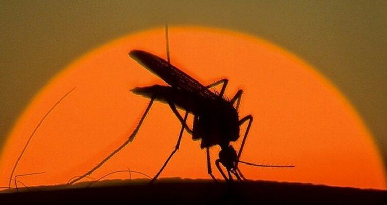 sny-o-nasekomyh-k-chemu-snyatsya-muhi-komary-moshki-muhobojka-i-drugie-20-znachenij-foto-snitsya-komar-na-fone-solntsa
