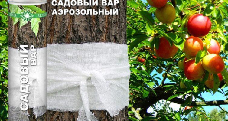 kak-sdelat-sadovyj-var-i-kak-ego-primenyat-foto-i-video-instruktsiya-foto-aerazolnyj-sadovyj-var