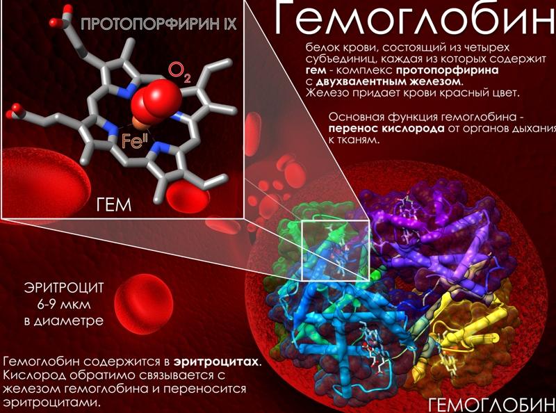 prichiny-nizkogo-gemoglobina-kakova-norma-u-muzhchin-i-zhenshhin-i-kak-podnyat-effektivnye-sposoby-i-sredstva