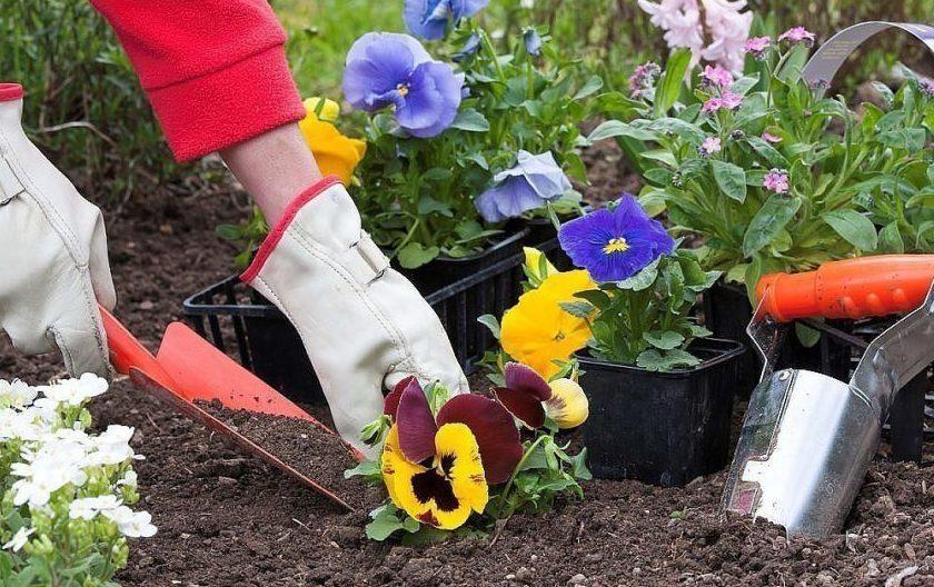 картинки клумбы сад и огородника популярные