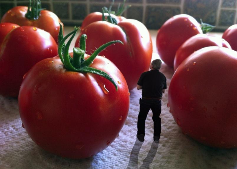 videt-pomidory-vo-sne-k-chemu-snyatsya-pomidory-tolkovanie-i-znachenie-snov-po-sonnikam-foto-chelovek-sred-ogromnyh-pomidor