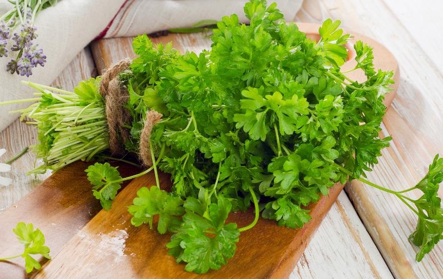 petrushka-poleznye-svojstva-petrushki-primenenie-i-protivopokazaniya-foto-petrushka-vitaminnaya-zelen