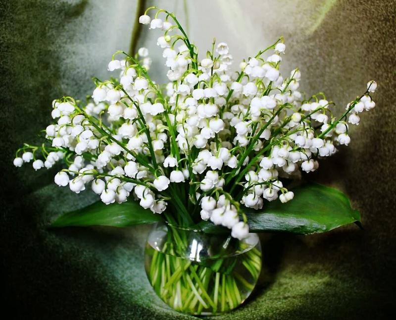 top-10-samyh-aromatnyh-tsvetov-v-mire-foto-tsvety-landyshi-buket-v-vaze