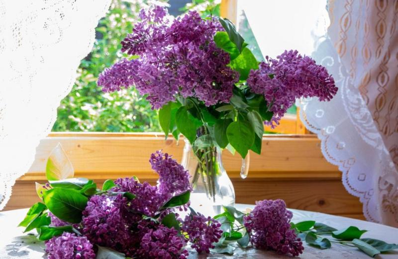 top-10-samyh-aromatnyh-tsvetov-v-mire-foto-tsvety-siren-buket-sireni-na-okne