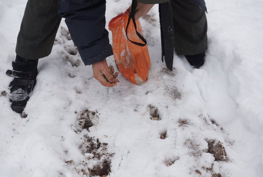 zametka-dlya-ogorodnikov-i-sadovodov-po-posevu-holodostojkih-ovoshhej-i-zeleni-pryamo-v-sneg
