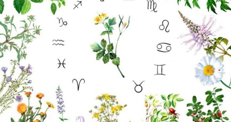 kakoe-vashe-lekarstvennoe-rastenie-po-znaku-zodiaka...