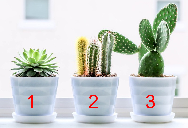 test-prognoz-na-ispolnenie-zhelaniya-vyberite-1-kaktus-iz-3-kaktusov-i-uznajte-ispolnitsya-li-vashe-zagadannoe-zhelanie...