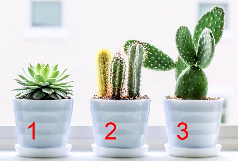 test-prognoz-na-ispolnenie-zhelaniya-vyberite-1-kaktus-iz-3-kaktusov-i-uznajte-ispolnitsya-li-vashe-zagadannoe-zhelanie