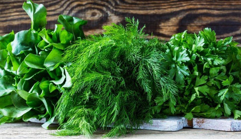 tri-luchshih-sposoba-retsepta-zagotovki-zeleni-sushka-zamorozka-i-zasolka