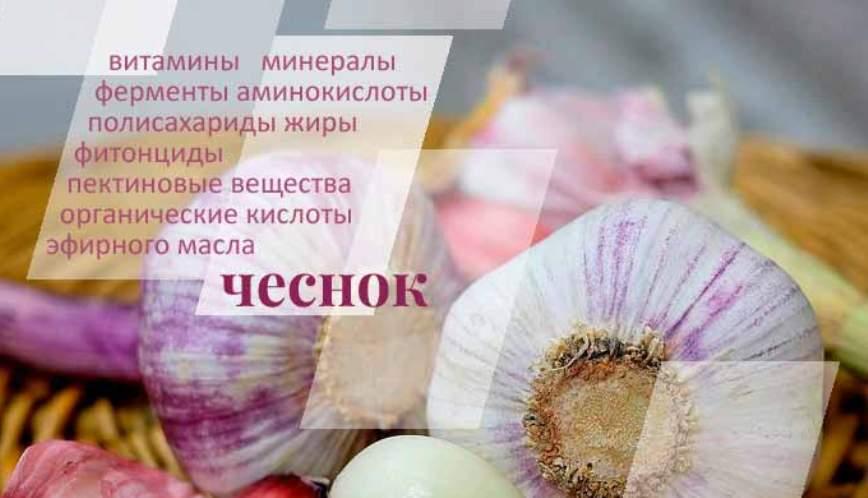chesnok-i-ego-lechebnye-svojstva-s-nauchnoj-tochki-zreniya-foto-i-tablitsy-poleznyh-svojstv-chesnoka
