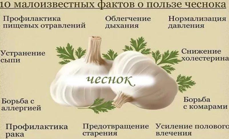 chesnok-i-ego-lechebnye-svojstva-s-nauchnoj-tochki-zreniya-tablitsa-10-maloizvestnyh-faktov-o-chesnoke