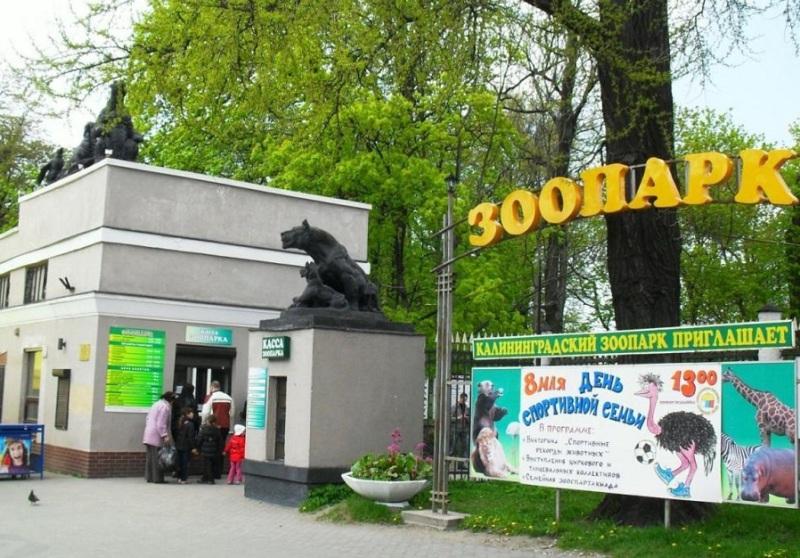 5-samyh-interesnyh-zooparkov-Rossii-gde-stoit-pobyvat-detyam-i-vzroslym-foto-kaliningradskij-zoopark...