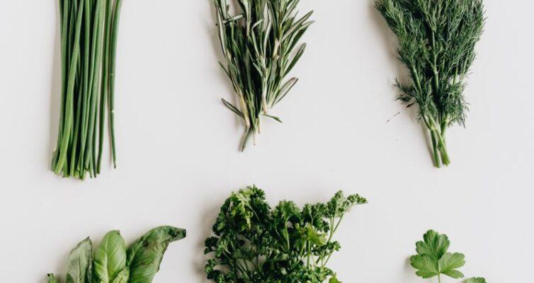 poleznye-svojstva-zeleni-i-trav-primenyaemye-v-pishhe-i-v-lechenie