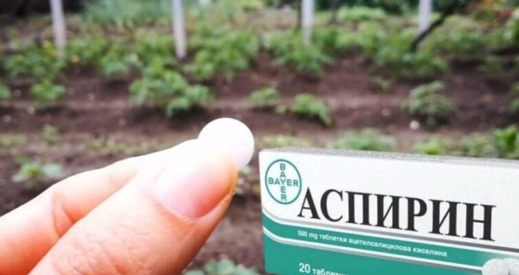 aspirin-sposoby-primeneniya-v-sadu-ogorode-i-v-bytu-poleznye-sovety-sadavodam
