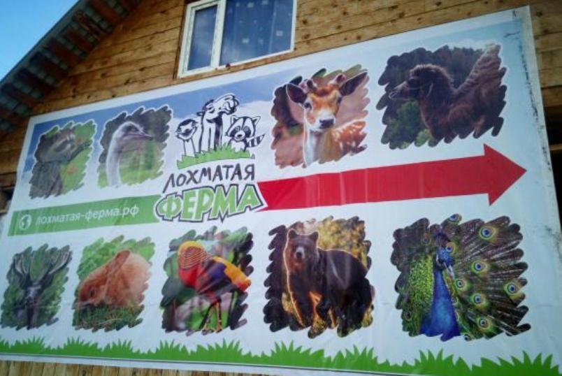 7-ekoparkov-i-pitomnikov-Rossii-foto-kontaktnyy-ekopark-lohmataya-ferma-na-Altae