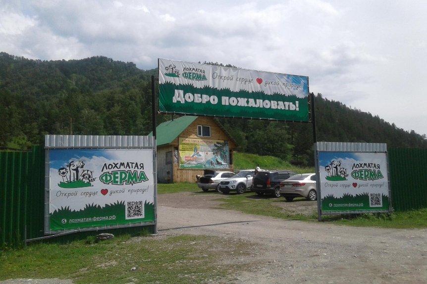 7-ekoparkov-i-pitomnikov-rossii-gde-dikie-zhivotnye-blizhe-chem-vy-dumali-foto-kontaktnyy-ekopark-lohmataya-ferma-Altay