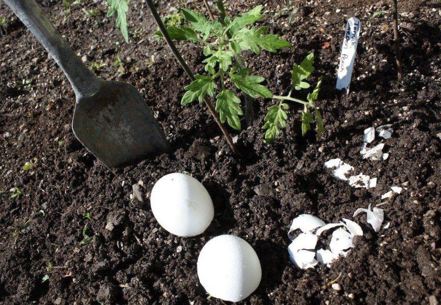 kakoy-organicheskiy-musor-mozhno-zakapyvat-pryamo-v-pochvu-v-ogorode-ne-otpravlyaya-ego-v-kompost