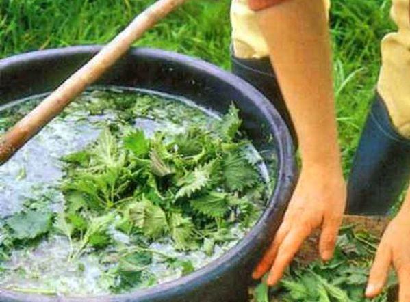 kak-sdelat-ekologichnye-udobreniya-dlya-ovoschey-i-fruktov-v-domashnih-usloviyah-foto-zhidkoe-udobrenie-kompost-iz-krapivy