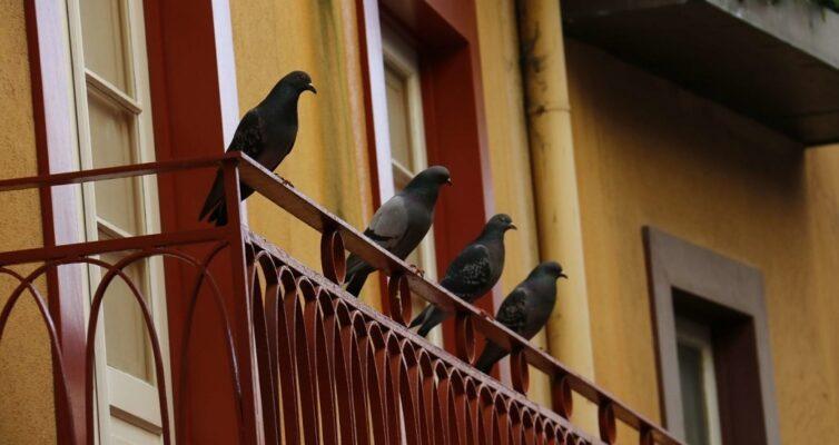 poverya-i-primety-pro-balkon-i-lodzhiyu