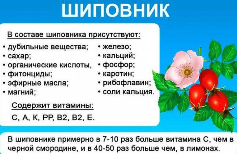 tselebnye-svoystva-shipovnika-komu-polezen-shipovnik-a-komu-nelzya-foto-svoystva-i-sostav-shipovnika