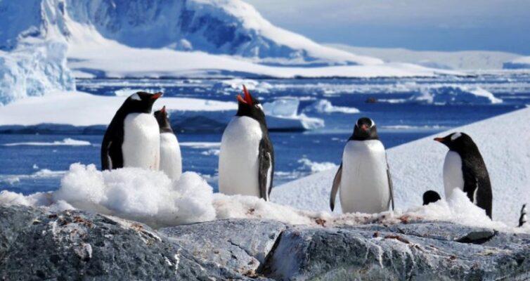 antarktida-i-antarktika-v-chyom-raznitsa-i-otlichie-foto-antarktika-imperatorskie-pingviny