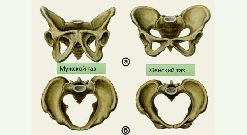 chem-otlichaetsya-zhenskij-skelet-ot-murzhskogo-foto-shema-skeleta-taza-muzhskogo-i-zhenskogo