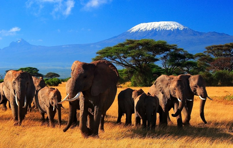 avstraliya-i-afrika-v-chem-raznitsa-i-otlichie-opisanie-i-foto-afrika-priroda-slony