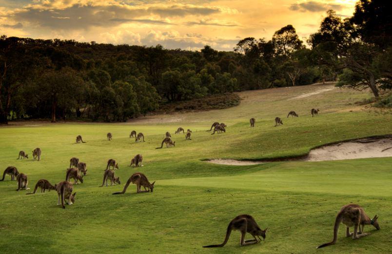 avstraliya-i-afrika-v-chem-raznitsa-i-otlichie-opisanie-i-foto-avstraliya-priroda-kenguru